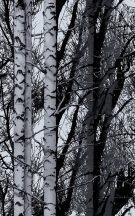 Dc-fix 200-3197 Deko Wood Fotoprint öntapadó tapéta
