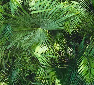 As-Creation Neue Bude 2.0, 36200-1 fotorealisztikus pálmalevél 3D zöld tapéta