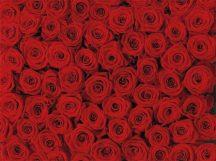 Komar Roses 4-077 poszter
