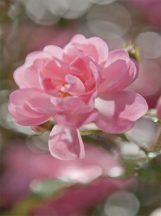 Komar Bouquet 4-713 poszter
