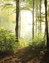 Marburg Smart Art Easy 47221 Natur Fantasy erdő zöld barna sárga fehér falpanel