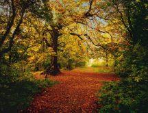 Komar Autumn Forest 8-068 poszter