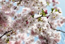 Komar Spring 8-507 poszter