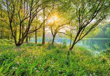 Komar Spring Lake 8-524 poszter