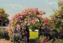 Komar 8-936 Rose Garden poszter
