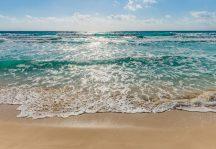 Komar Seaside 8-983  poszter