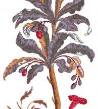Casadeco Encyclopedia 83526564 PANORAMIQUE ARBORETUM FIG 1 BLEU Natur magányos fa egzotikus virágokkal fehér szines falpanel