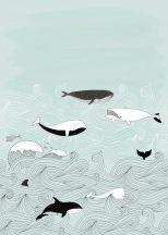 Rasch Bambino XVIII 842500  gyerekminta natur kékbálna kardszárnyú delfin türkiz fehér fekete falpanel
