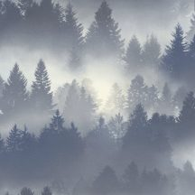 Rasch b.b home passion 860832 sűrű fenyőerdő kék szürke fehér tapéta