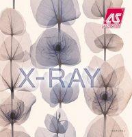 X-Ray 2019