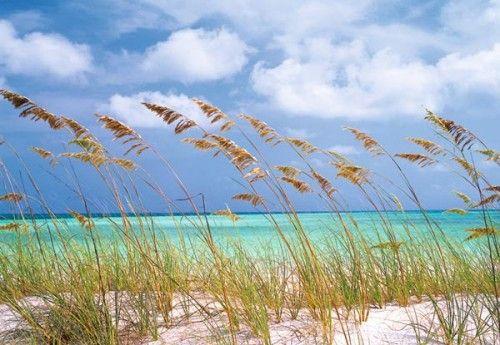 Komar Ocean Breeze 8-515 poszter