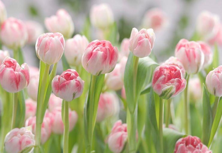 Komar Secret Garden 8-708 poszter